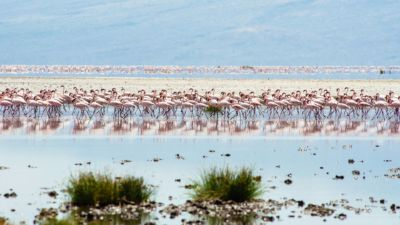Flamingo Safaris