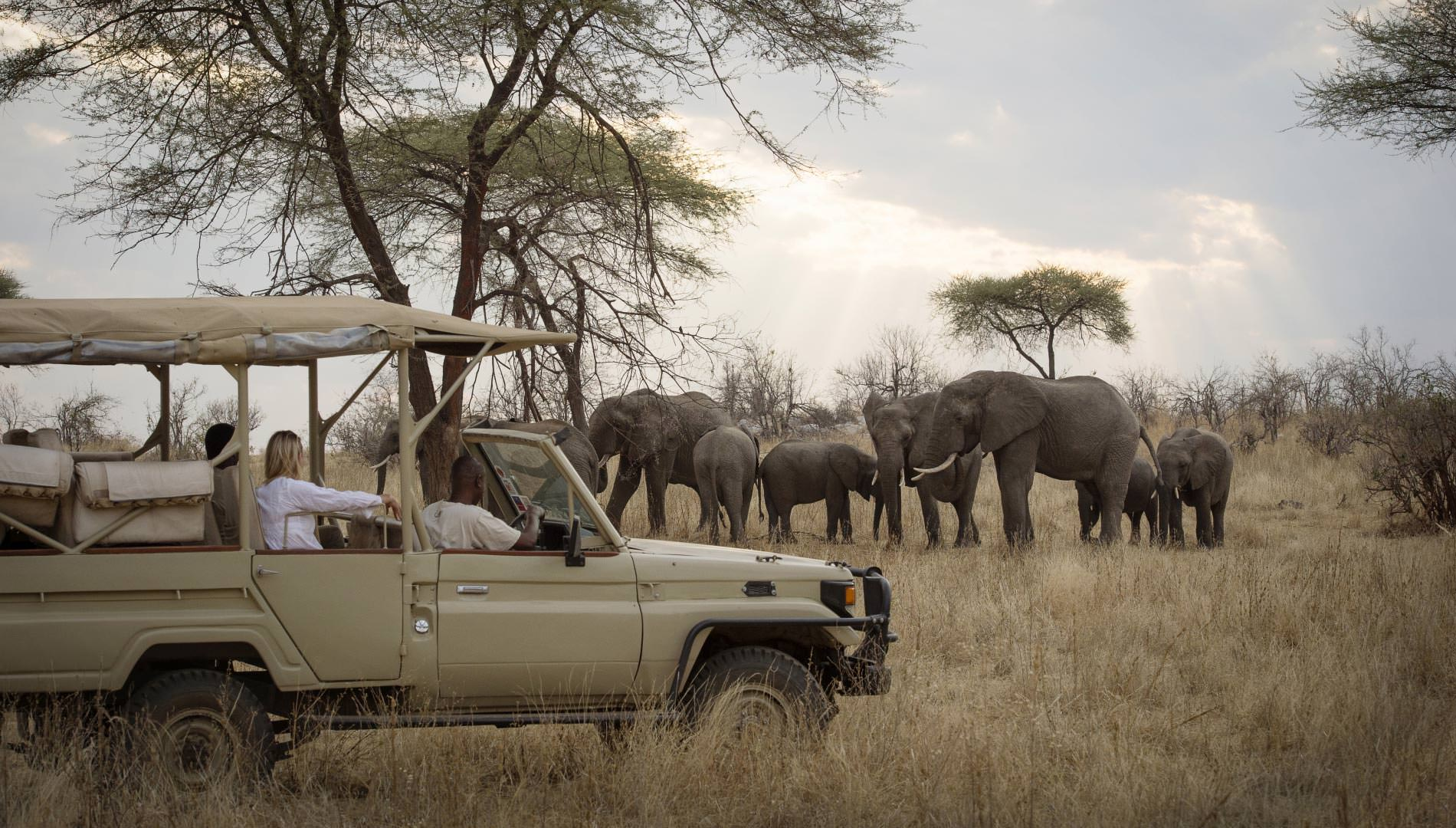 Viewing elephants from an open vehicle