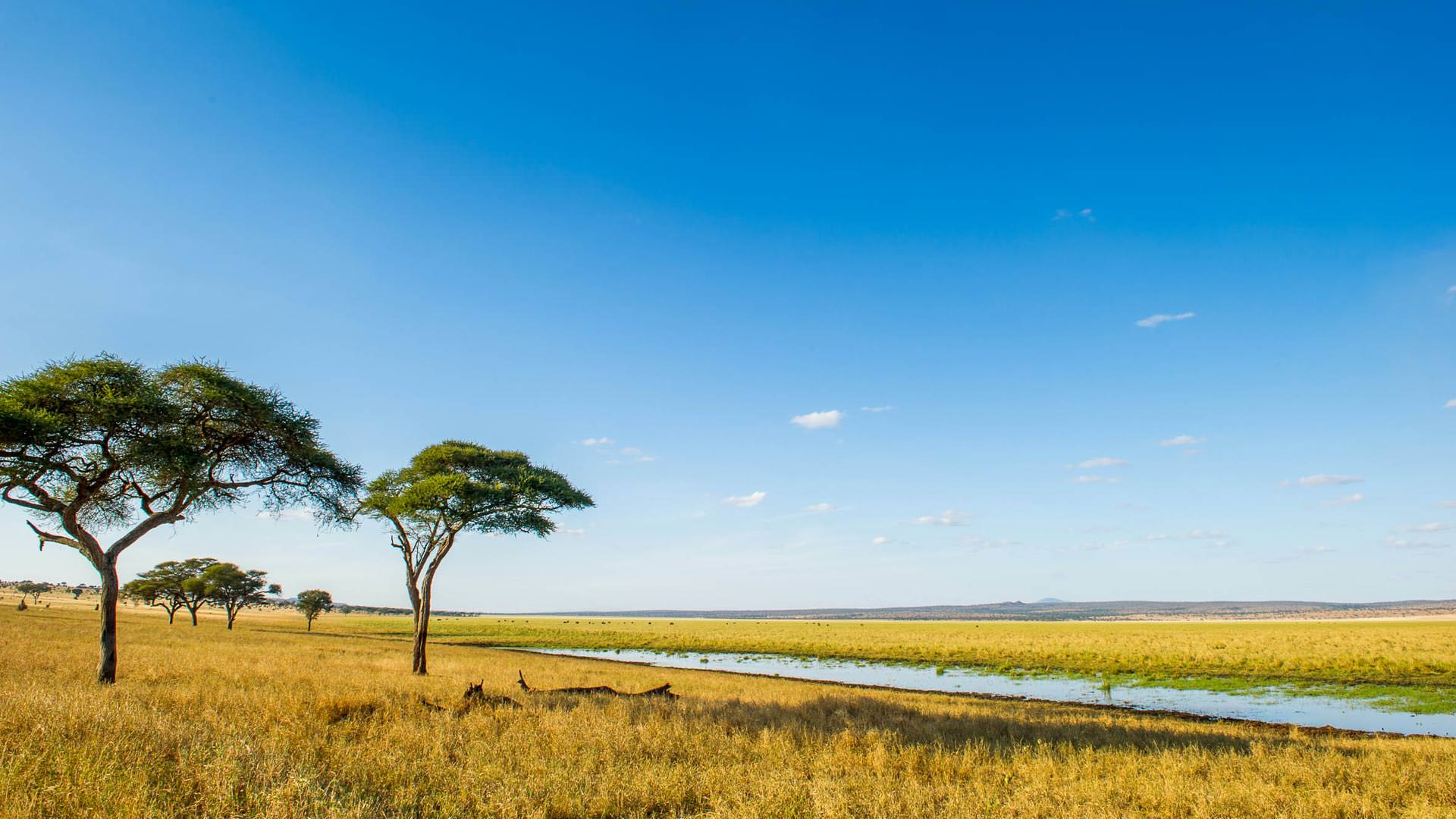 Silalei swamps in Tarangire