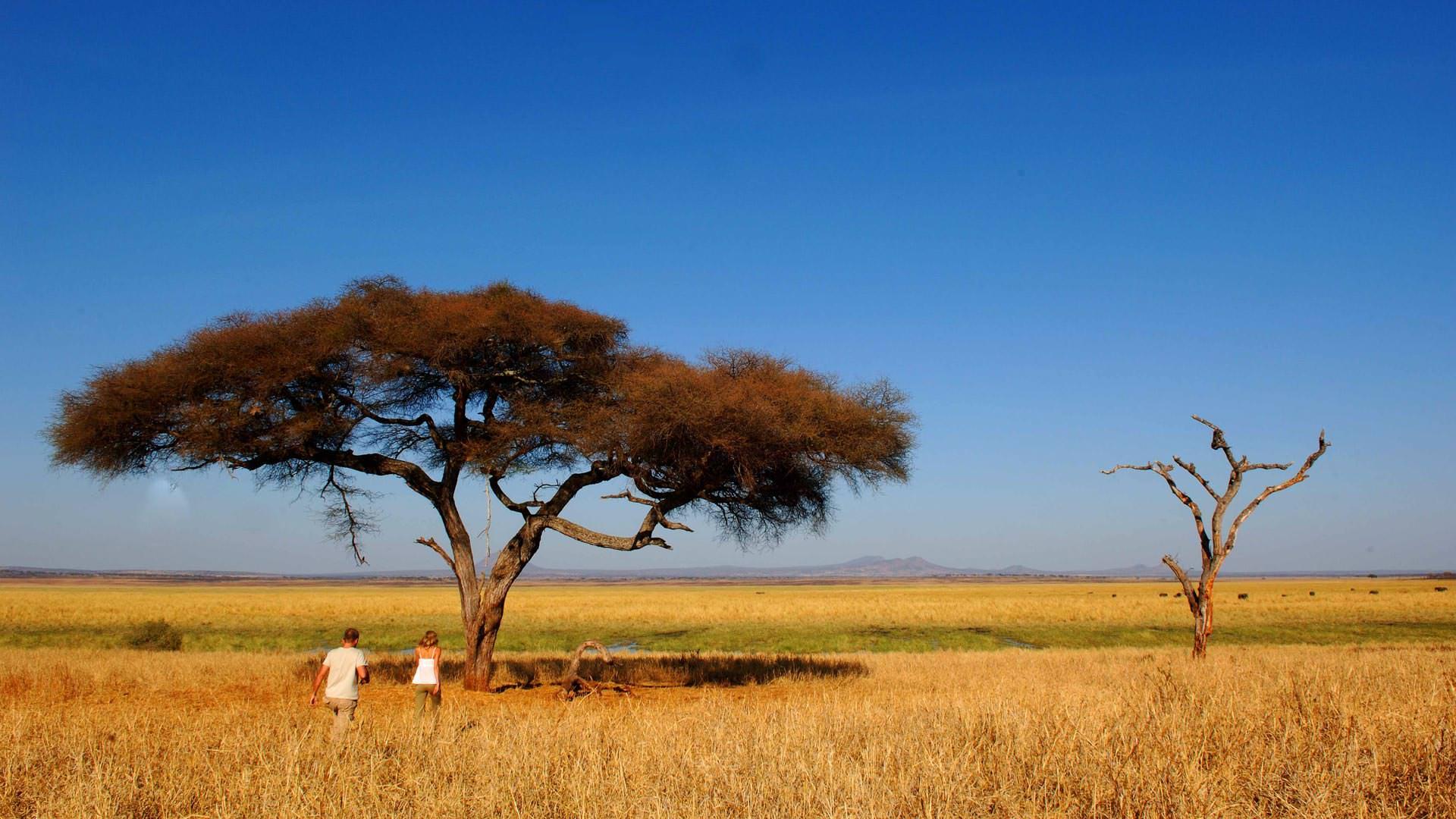 Tarangire view - at Silalei