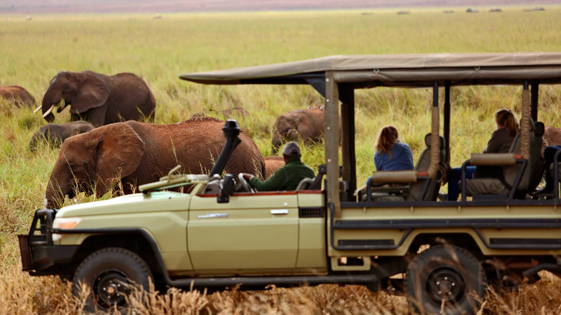 Viewing elephants