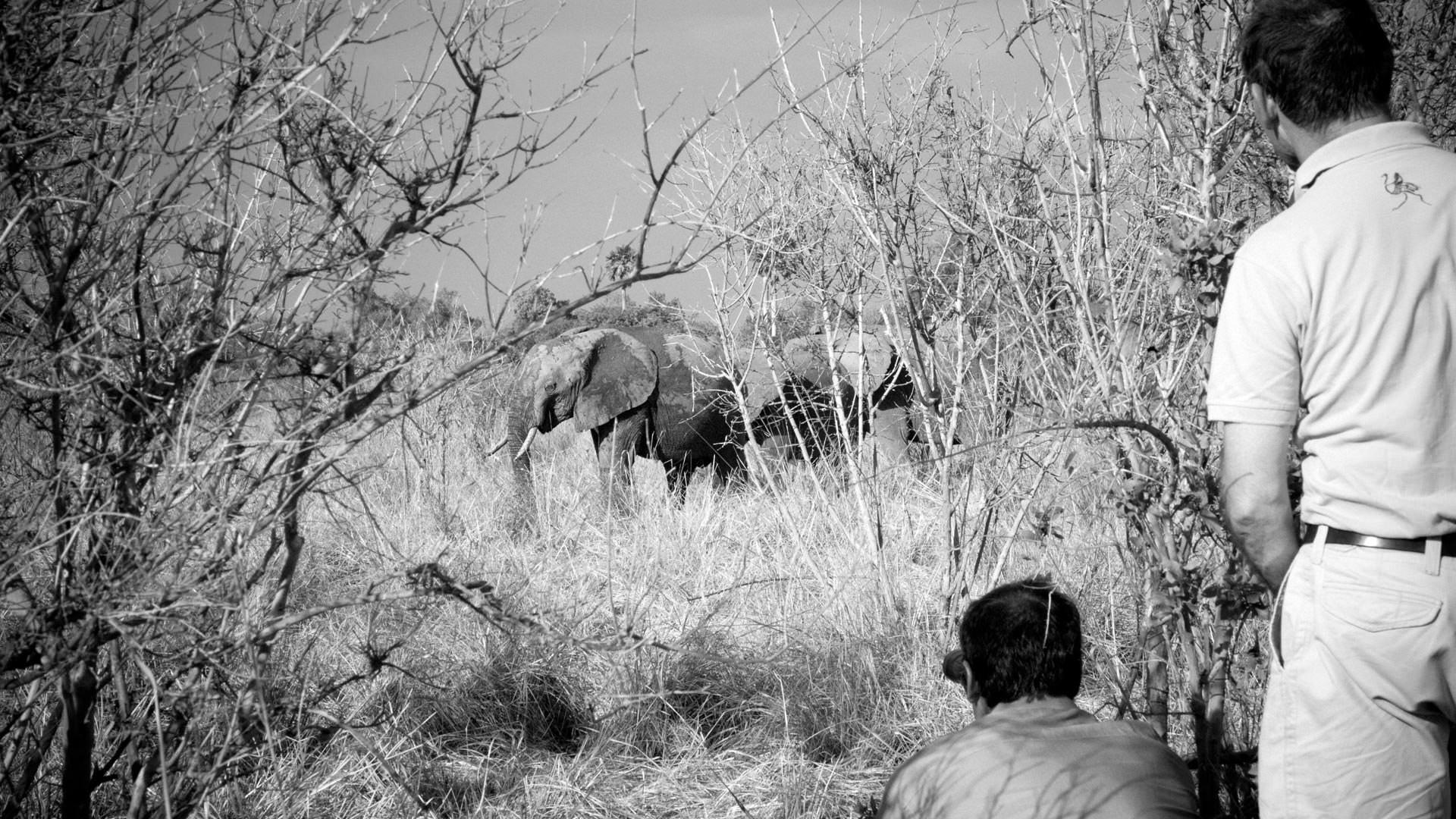 Watching elephants on foot