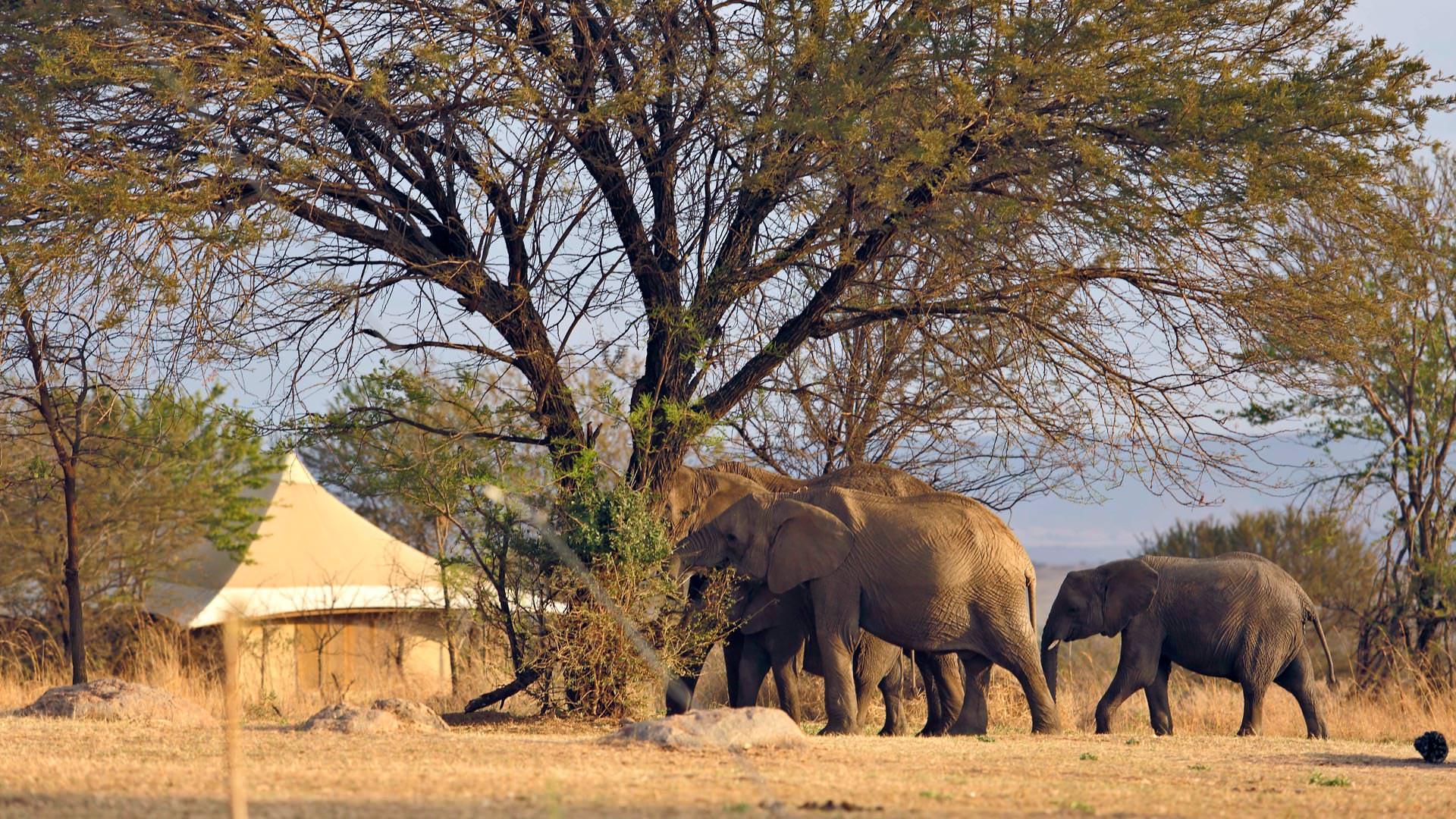 Elephants passing Sayari Camp