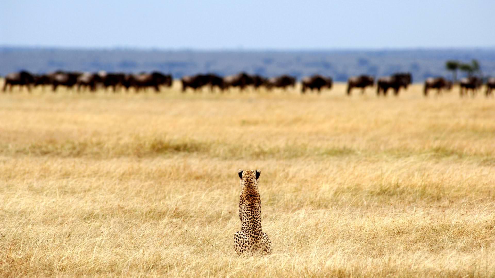 Safaris in Serengeti