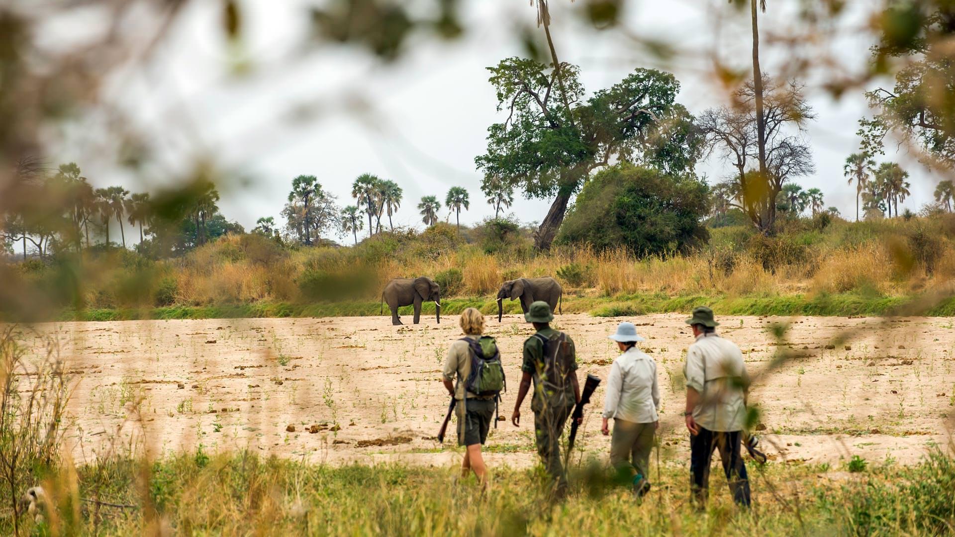 Approaching elephants on foot