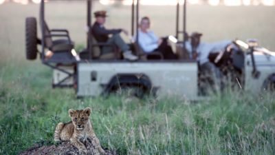 Lion cub and 4x4
