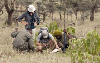 Walking in the Serengeti
