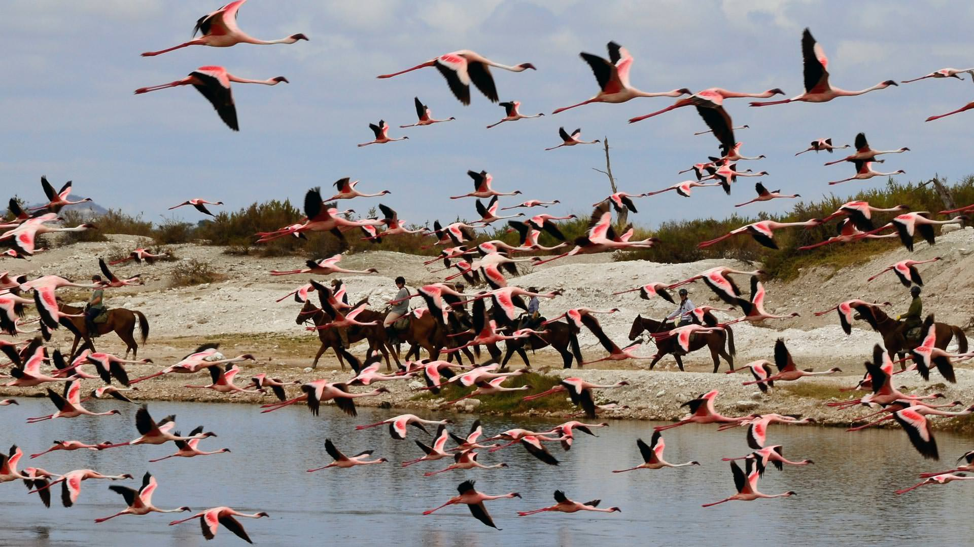 Flamingo and Horse Riders at Sinya Mines
