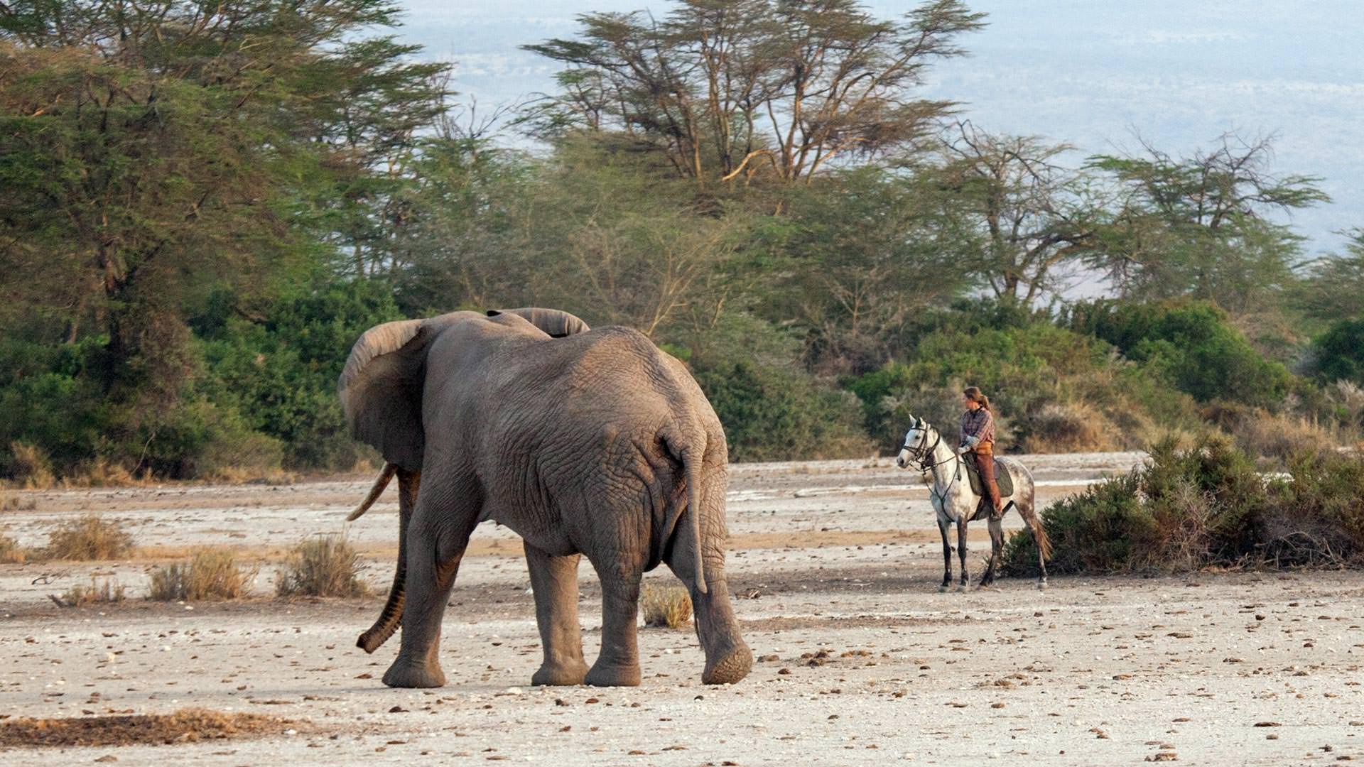Joanna tempting a bull elephant at Sinya