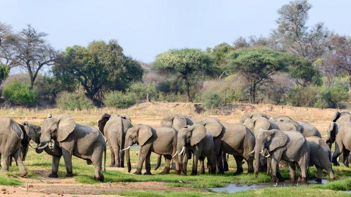 Elephant herd near Jabali Ridge