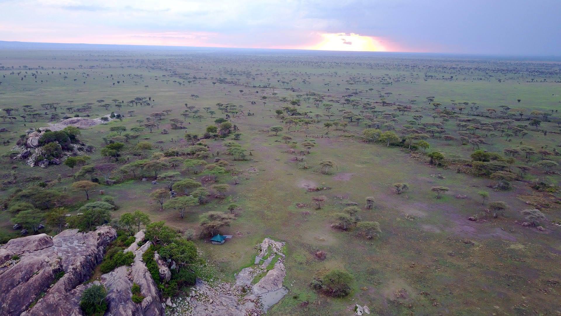 Serengeti walking camp setting