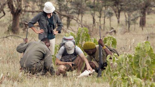 examining a skull on a Serengeti walk
