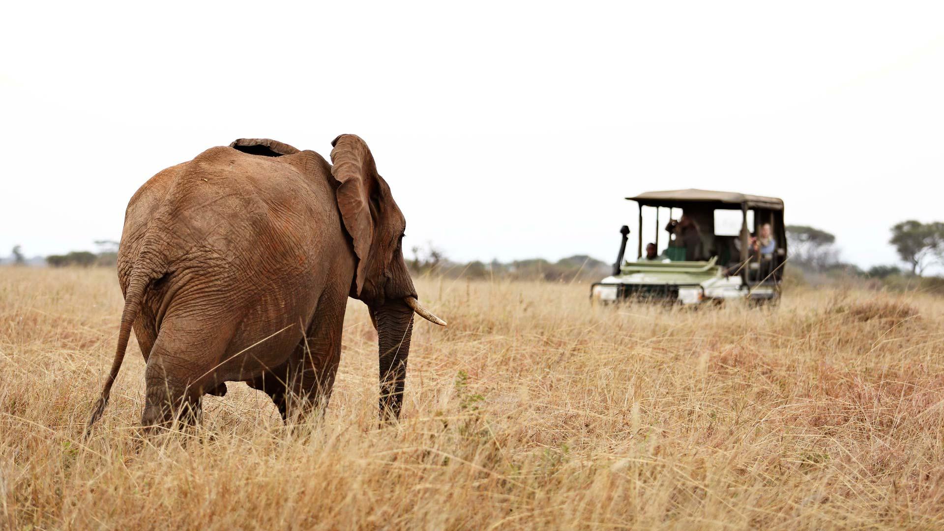 Elephant approaching car