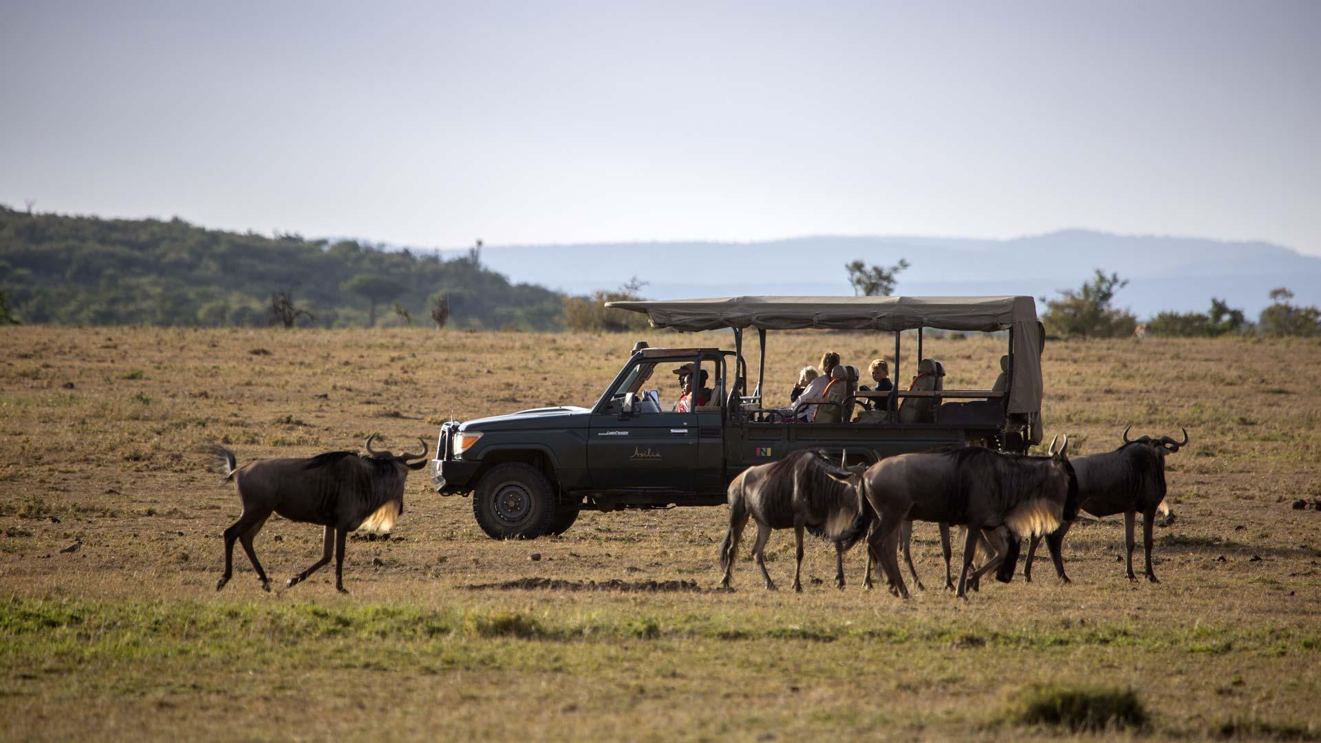 Open 4x4 with wildebeest