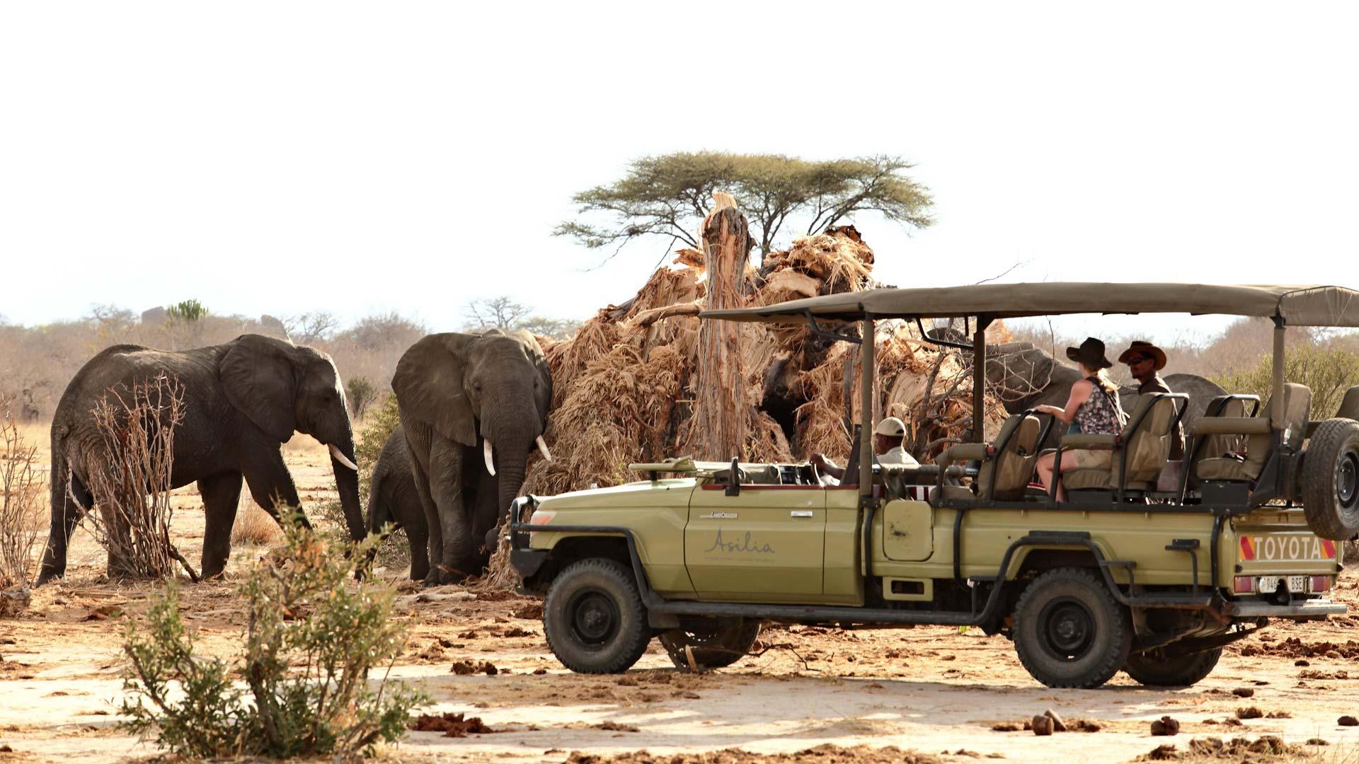 Elephant eating Baobab