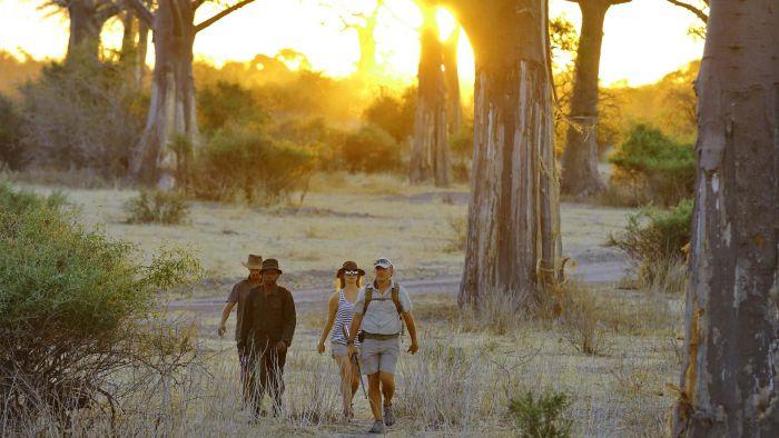 Guided bush walk