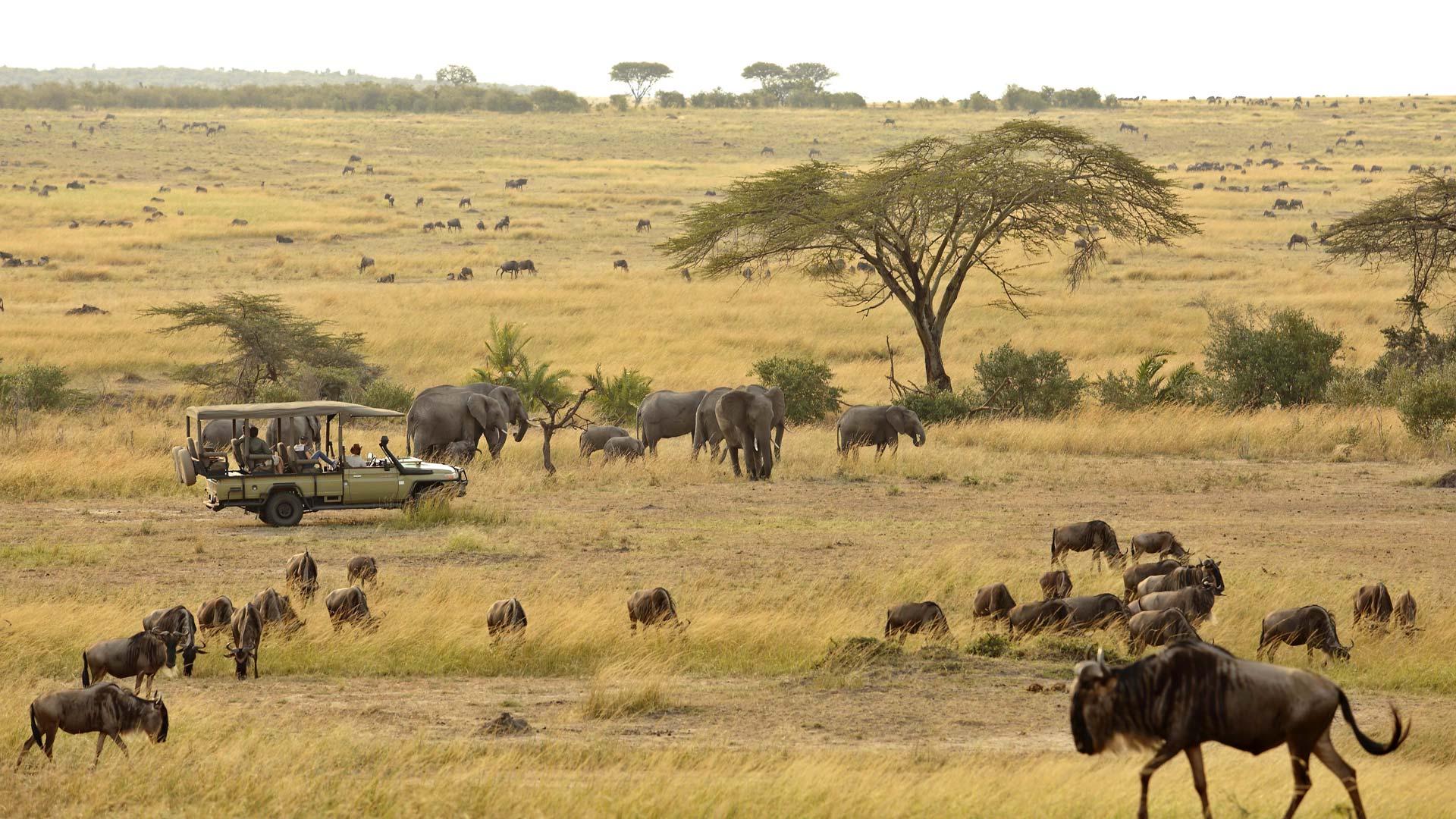 Elephant and Wildebeest Gamedrive