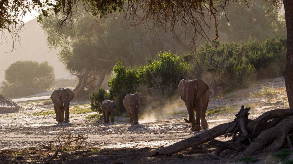 Approaching elephants